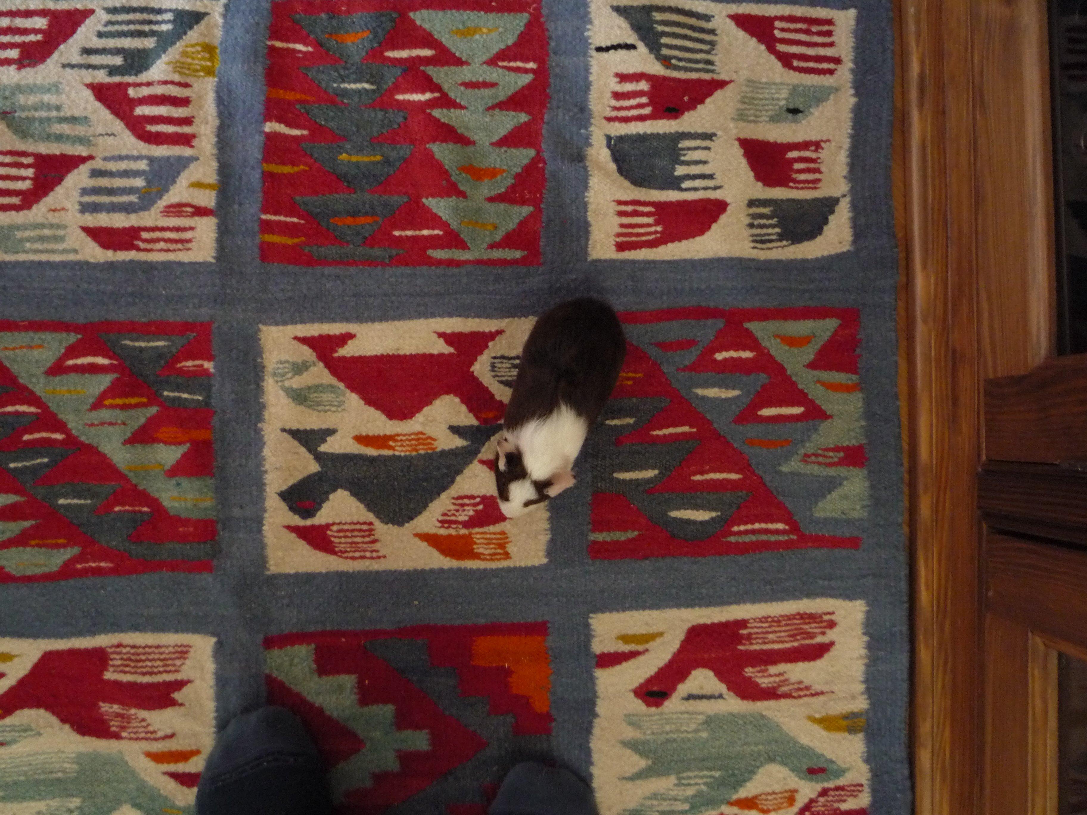 Gisèle promenade sur tapis berbère